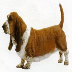 Москва собаки хатико продажа собаки